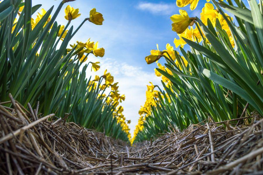Een symetrische foto gemaakt vanuit kikkerperspectief in een tuin vol bloemen